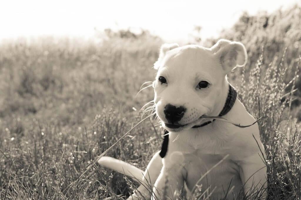 dog-837540_1280