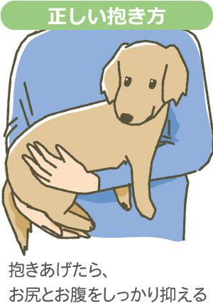 犬正しい抱き方
