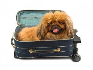 Dog in travel case