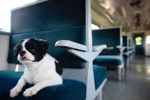 電車に乗る犬