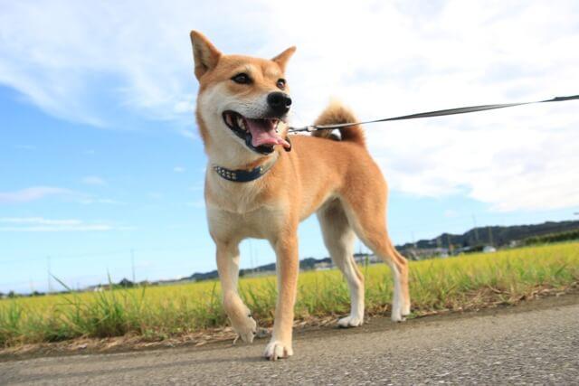 犬とお散歩!