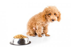 劣悪なフードに気をつける犬