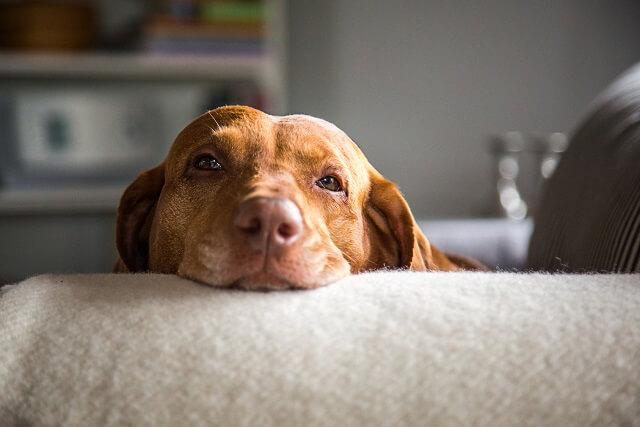 犬の老化のサインとは 獣医師が解説 ワンペディア