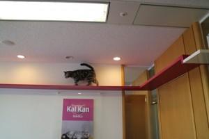 会議室で遊ぶ猫