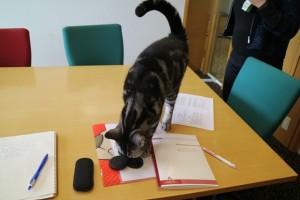 机の上で遊ぶ猫