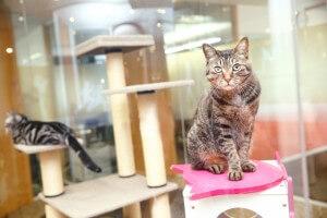 社内にいる日本猫