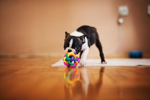 犬が何かを守ろうとするときの攻撃行動【獣医師が解説!】