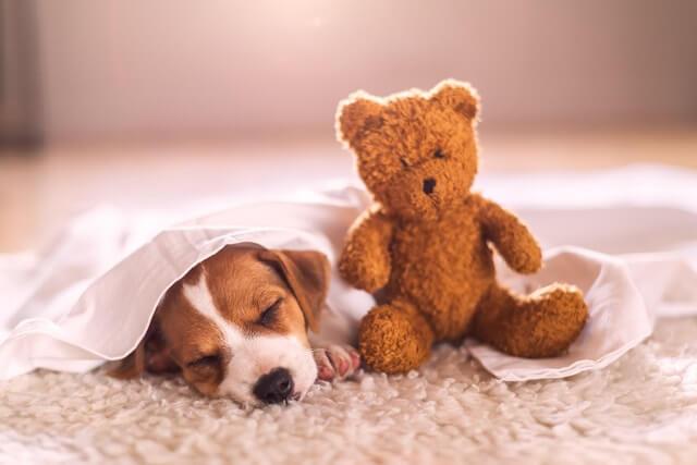 犬の名前の決め方 ワンペディア