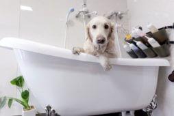 dog-shampoo-638x350