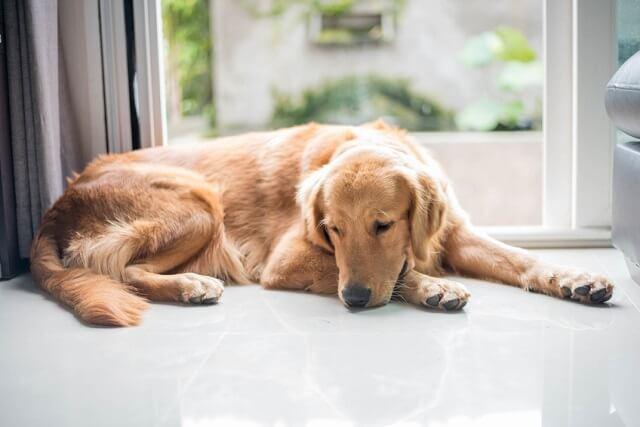 犬のストレスサインとは どんな行動をするの 獣医師が解説