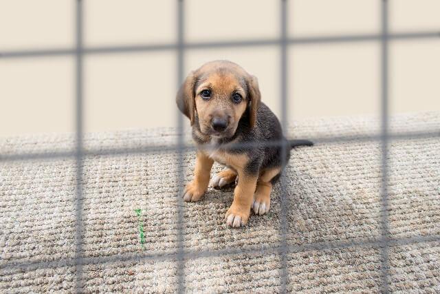 sad puppy in a kennel