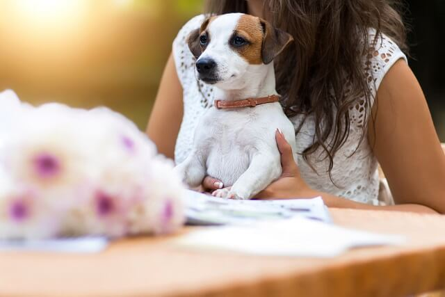 Young, beautiful girl has received a long-awaited gift - dog breed Jack Russell Terrier. Girl sitting at a restaurant or cafe table outdoors. Wonderful summer, sunny day.