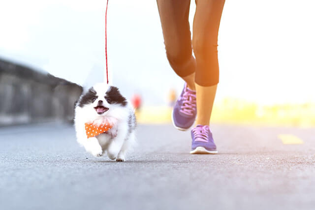 Puppy dog running exercise on the street park in the morning