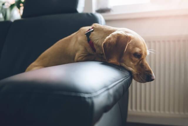 犬が大量に水を飲むのはなぜ なにかの病気 ワンペディア