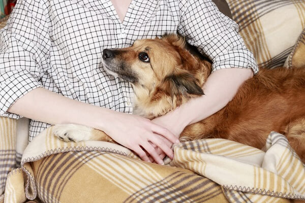Young woman sitting on the sofa with her cute dog