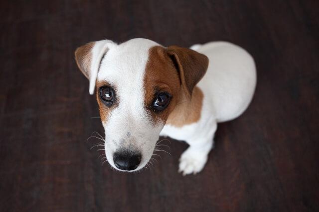doenças renais em cães