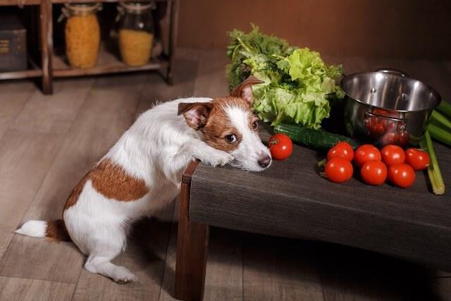犬 に あげ て は いけない 食べ物 10