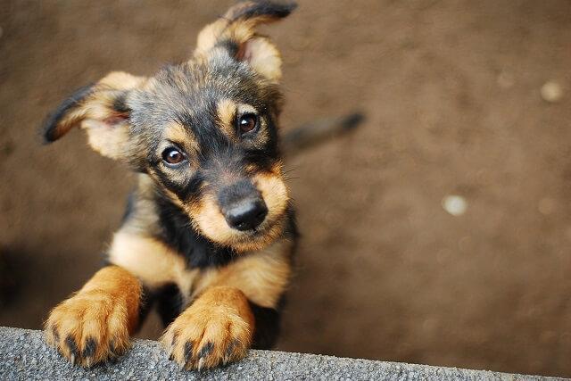 獣医師監修 成犬とはどこが違う 子犬の健康を細かくチェックする方法